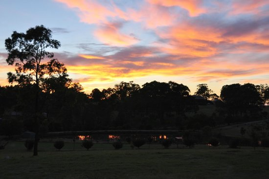Willow Tree Estate: Sunrise mirrored in the lake