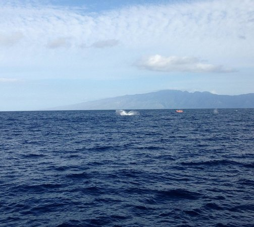 Hawaii Ocean Project: A whale's tail in the distance!