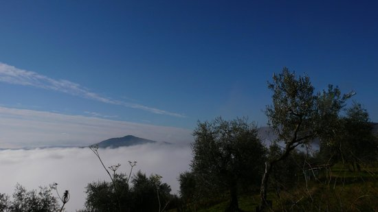 Agriturismo Podere il Poggiolo: View from the edge of the villa in the morning