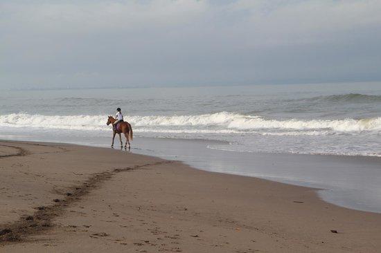 Bali Equestrian Centre: Beach ride.