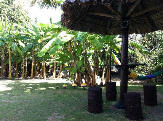 Casa Carlos y Ana Maria : giardino2