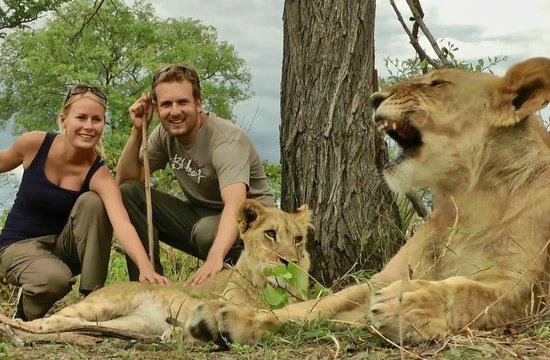Lion Encounter: Did they feed them?