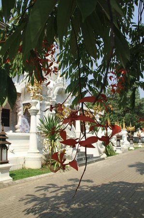 Chiang Mai Adventure Tour: temple