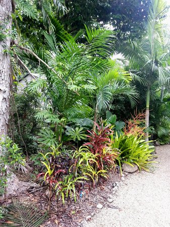 Boutique Bungalows: wonderful plant life