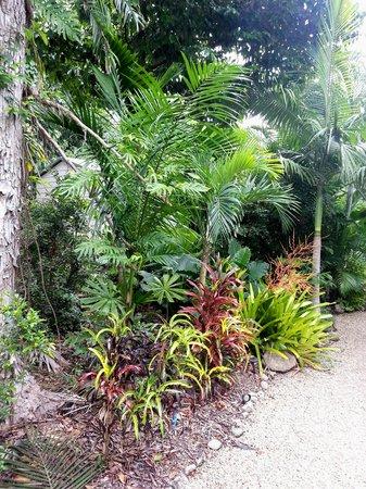 بوتيك بونجالوس: wonderful plant life