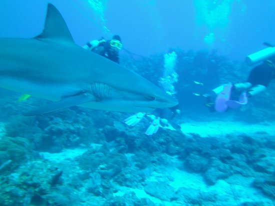 Anthony's Key Resort: Shark dive with my wife Gail (yellow mask)