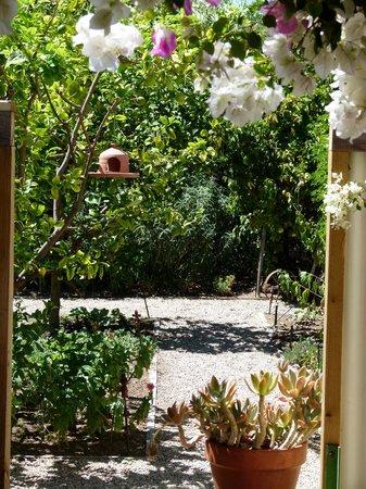 Prince Albert Country Store :                   stunning garden
