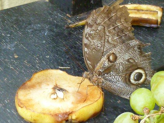 Pili Palas Nature World: Feeding Table