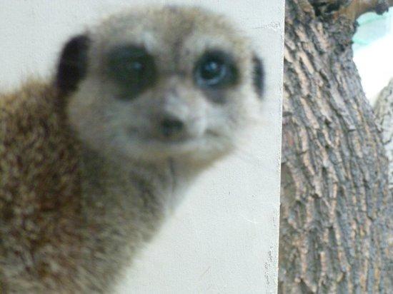 Pili Palas Nature World: Meerkat Manor