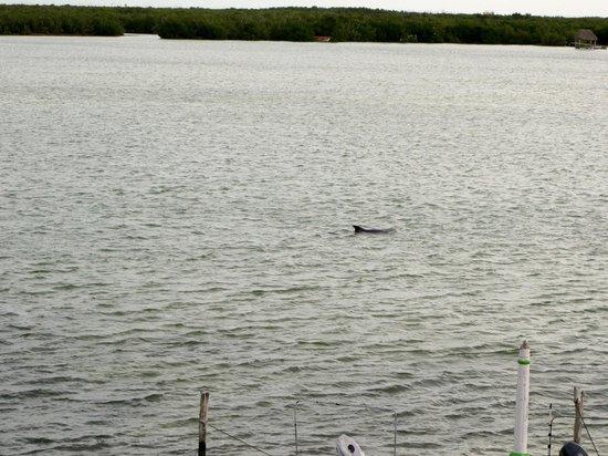 Hotel Villa de Pescadores : des dauphins devant l'hôtel