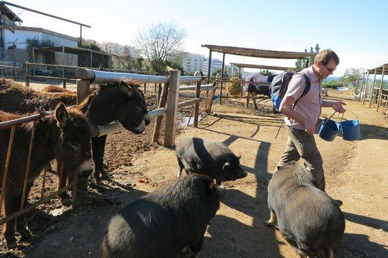 Nerja Club: Being chased by the Pot-Bellied Pigs at the Donkey Sanctuary
