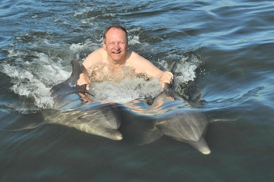 Dolphin Research Center: two dolphin pull