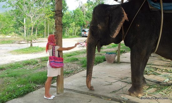Kok Chang Safari Elephant Trekking照片