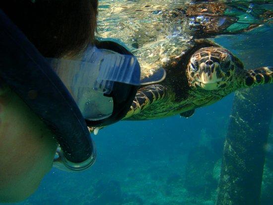 Isla de Praslin, Seychelles: Ilot Coco, rencontre merveilleuse