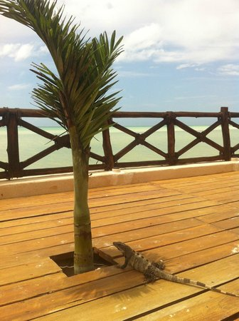 Las Nubes De Holbox: Iguana in the sun