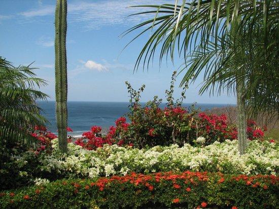 Orquidea del Sur: View