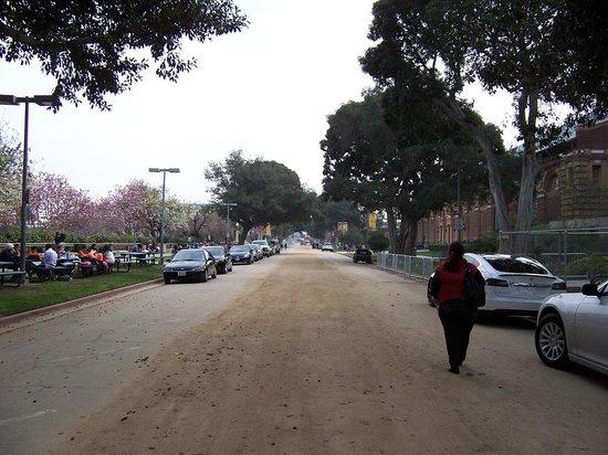 Los Angeles County Museum of Art: Calle lateral al Museo, encontrarás bellos ejemplares de plantas, flores, orquideas etc, etc
