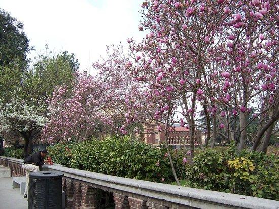 Los Angeles County Museum of Art: Calle lateral al Museo, encontrarás bellos ejemplares de plantas, flores, orquideas etc,