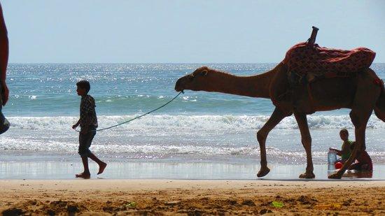sprakling taghazout beach