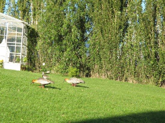 Los Ponchos Apart Boutique: bird-watching in the backyard