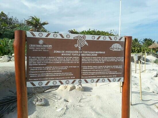 Grand Bahia Principe Coba: turtle enclave