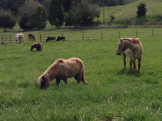 Alisal Guest Ranch & Resort: Beautiful grounds