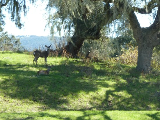 Alisal Guest Ranch & Resort: On the way to the fishing lake