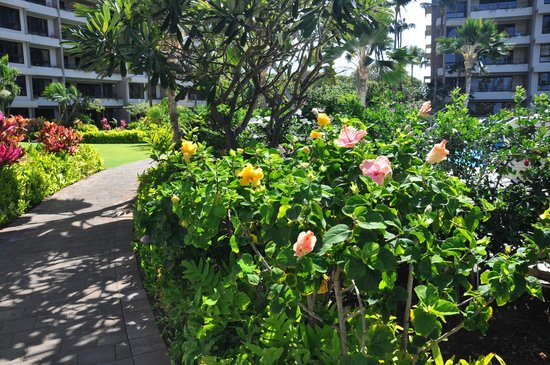 Kaanapali Alii: Wonderful well maintained gardens