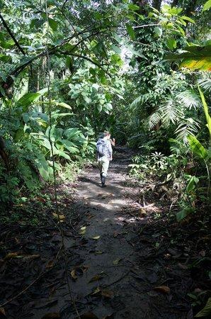 Corcovado Info Center:                                     Walking in Corcovado