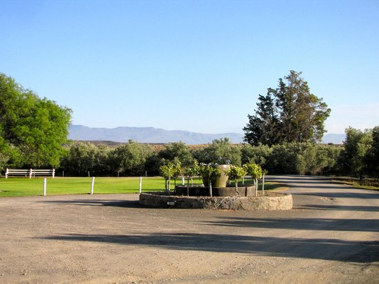 Olive Grove Guest Farm: The beautiful view
