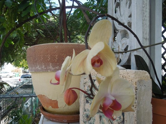 Jasmine House: Beautiful orchids on the porch