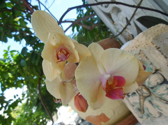 Jasmine House : Beautiful flowers on the porch