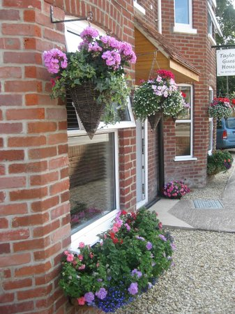 Taylors Guesthouse: Flowers in the sunshine