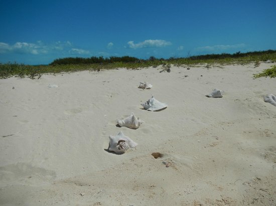 Island Routes Caribbean Adventures: No shortage of beautiful shells.. to look at!
