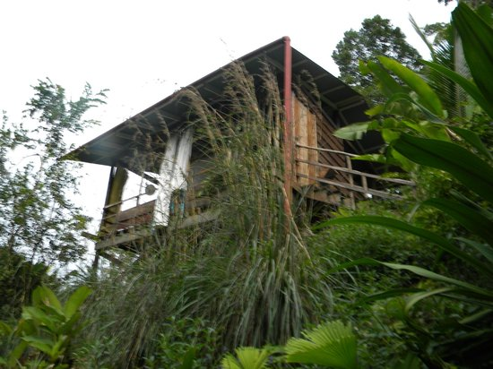 La Loma Jungle Lodge and Chocolate Farm: my cabin 1