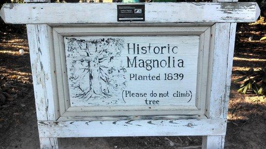 Historic Washington State Park: magnolia