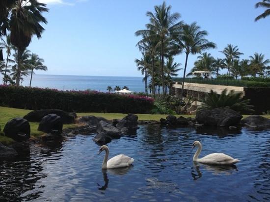 Ilima Terrace Restaurant : swan lake