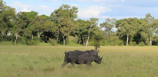 Imbali Safari Lodge: Rhino on Game Drive