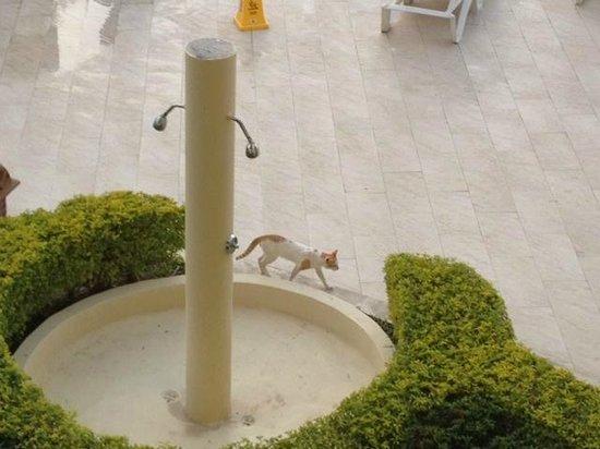Iberostar Rose Hall Beach Hotel: Local Cat