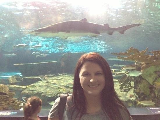 Ripley's Aquarium of the Smokies: me with shark
