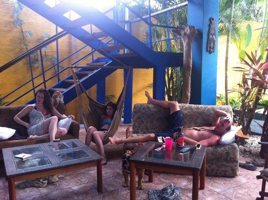 Hotel Kangaroo: Backyard hangouts