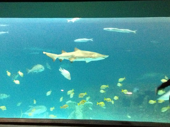 North Carolina Aquarium on Roanoke Island: Shark!
