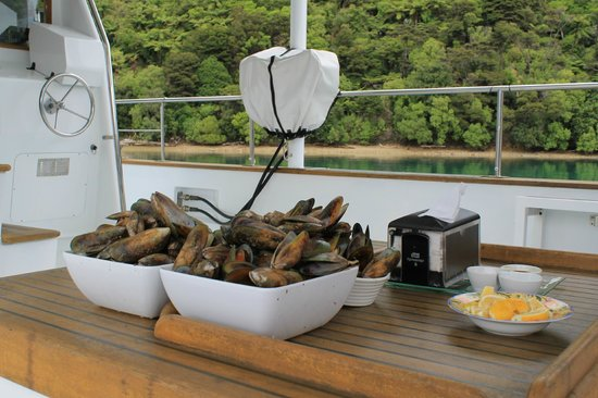 Greenshell Mussel Daily Cruise: Mouth-watering fresh mussels from the farm.