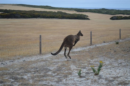 Flour Cask Bay Retreat:                                     Roo on my way to the beach