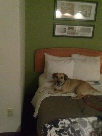 Sleep Inn & Suites Emmitsburg: they let zoey stay
