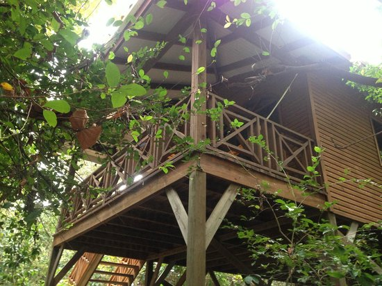 Hamanasi Adventure and Dive Resort: Typical Tree House