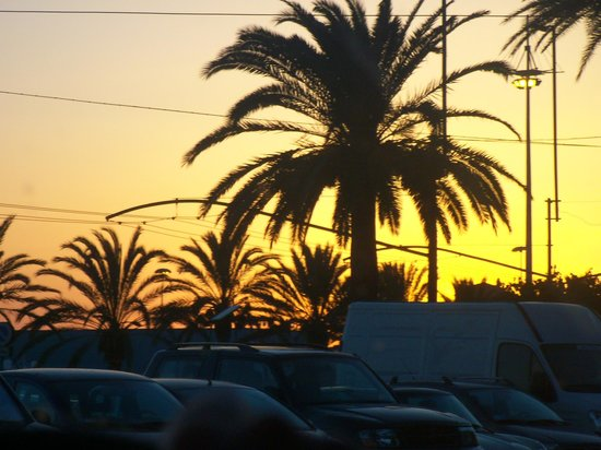 Best Western Hotel Residence Italia: Ah! Palms silhouetted by Gold