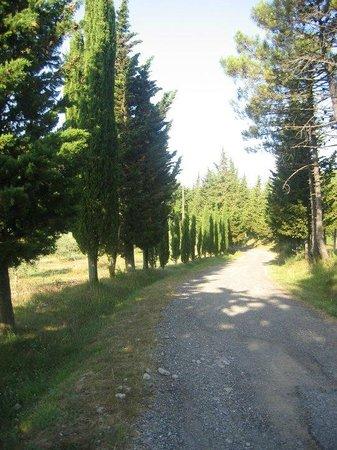 La Fontaccia: strada