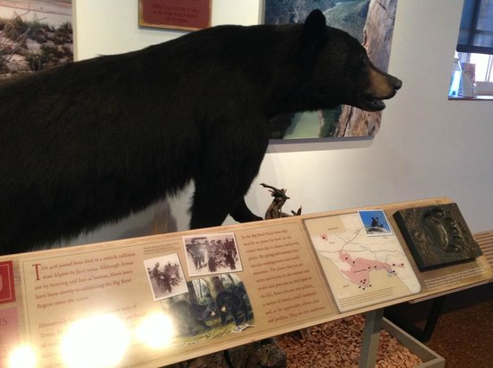 Museum of the Big Bend: Black Bear