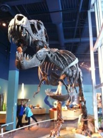 Science World:                   T-Rex